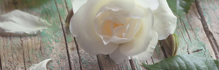 Weisse rose bestattung berlin